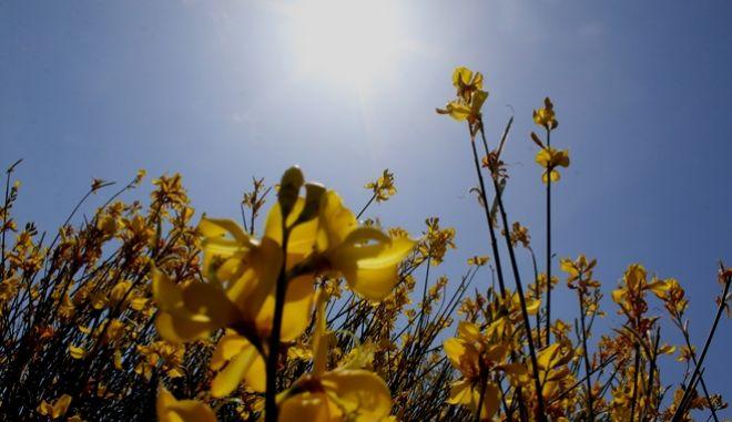 Ηλιοφάνεια και μικρή άνοδος θερμοκρασίας