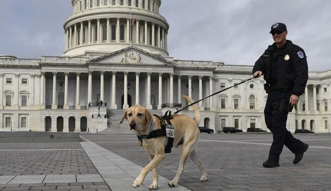Σκύλος της αστυνομίας