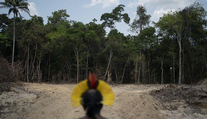 Αμαζόνιος: Διπλασιάστηκε από πέρυσι η αποψίλωση του τροπικού δάσους