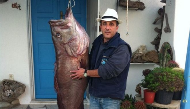 Μύκονος: Έπιασε ψάρι που ζυγίζει 50 κιλά