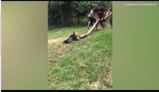 Βίντεο: Χωρικοί δίνουν μάχη για να σώσουν σκύλο από τα 'σαγόνια' ενός ανακόντα