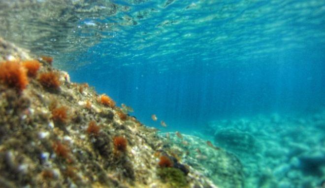 Καλοκαιρινό στιγμιότυπο από θαλάσσια περιοχή της Αττικής