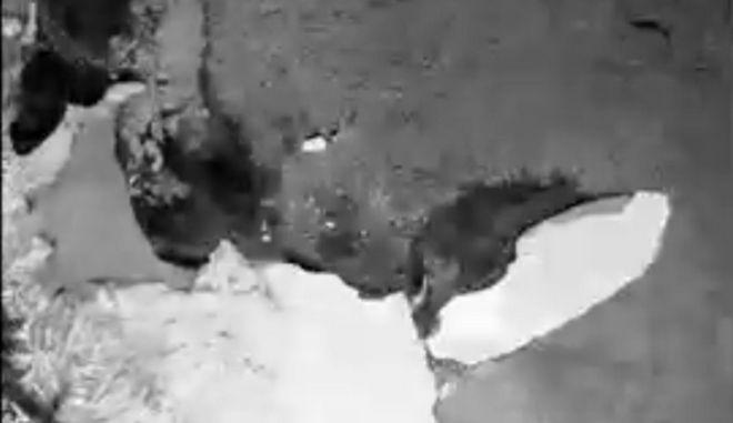 Κλιματική Αλλαγή: Α68, το μεγαλύτερο παγόβουνο στον κόσμο μετακινήθηκε από την Ανταρκτική