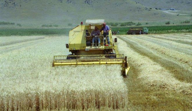 Στις τρεις πρώτες θέσεις εξαγωγέων δημητριακών και ρυζιού προς την Τουρκία, η Ελλάδα
