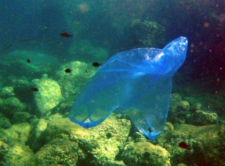 ΕΛΛΑΔΑ- Ο κόσμος του βυθού κινδυνεύει να μετατραπεί σε θαλάσσιους  σκουπιδότοπους απειλώντας τα ψάρια και 2583e045e22