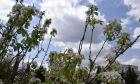 Σύννεφα στην Αργολίδα