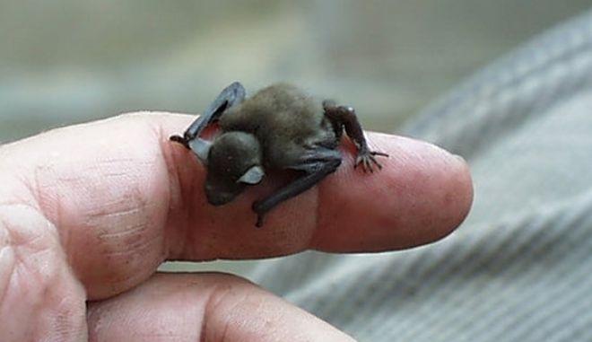 diaforetiko.gr : smallest animals3 Εκπληκτικές Φωτογραφίες: Ζώα μινιατούρες. Και όμως υπάρχουν!