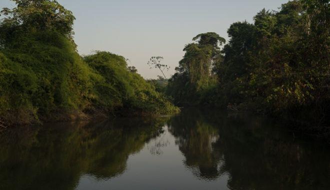 Το τροπικό δάσος του Αμαζονίου.