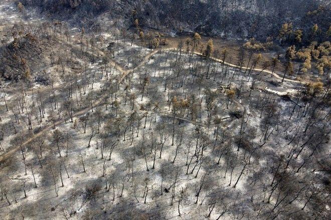 Καμένο δάσος στην Αγία Άννα της Εύβοιας