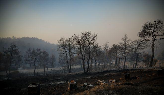 Με το πρώτο φως της ημέρας συνεχίζονται για 2η μέρα οι προσπάθειες κατάσβεσης της μεγάλης πυρκαγιάς στην Εύβοια