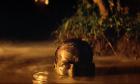 Δέκα ταινίες για το Βιετνάμ που πρέπει να δείτε