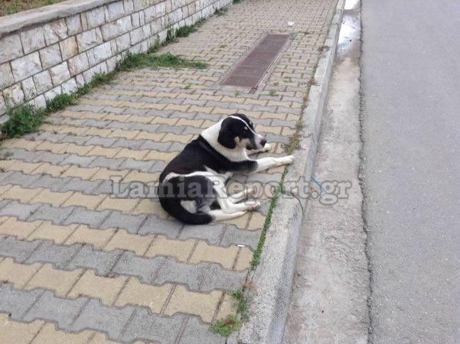 Κτηνωδία στη Λαμία: Σκότωσαν με φόλες αδέσποτα σκυλιά