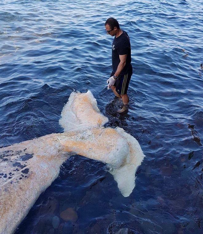 Νεκρή φάλαινα ξεβράστηκε στις ακτές της Σαντορίνης