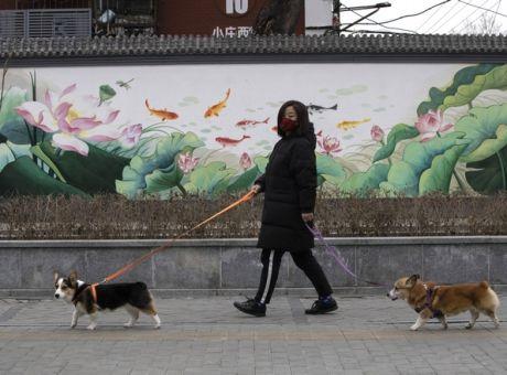 Κορονοϊός-Κίνα: 'Μη δίνετε φιλιά στα κατοικίδιά' - Κόσμος | News 24/7