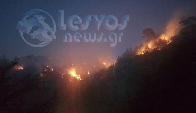 Μαίνεται η φωτιά στο Νεοχώρι Πλωμαρίου - Ολονύχτια μάχη με τις φλόγες