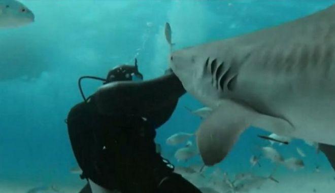 Κι όμως: Υπάρχει άνθρωπος που θέλει να τον δαγκώνουν καρχαρίες