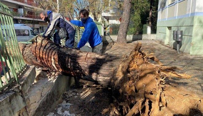 Θεσσαλονίκη: Δέντρο έπεσε σε αυλή δημοτικού σχολείου - Δεν τραυματίστηκαν μαθητές