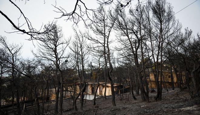 Επόμενη μέρα μετά την πυρκαγιά στην Κινέτα