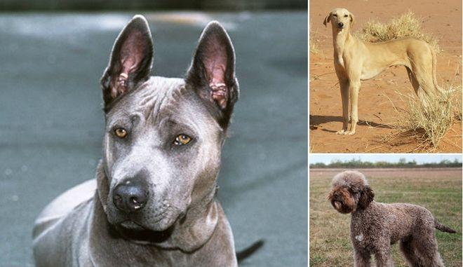 Κουίζ: 10 ράτσες σκύλων που δεν μπορείς να βρεις