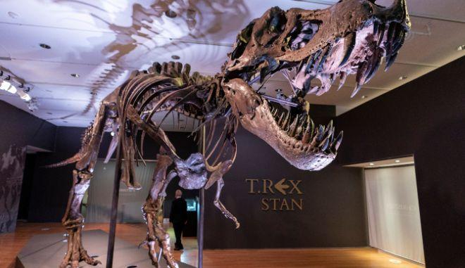 Πόσοι Tυραννόσαυροι Ρεξ υπήρξαν στη Γη;