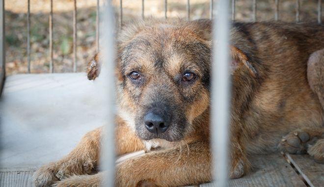 Σκύλος σε κλουβί