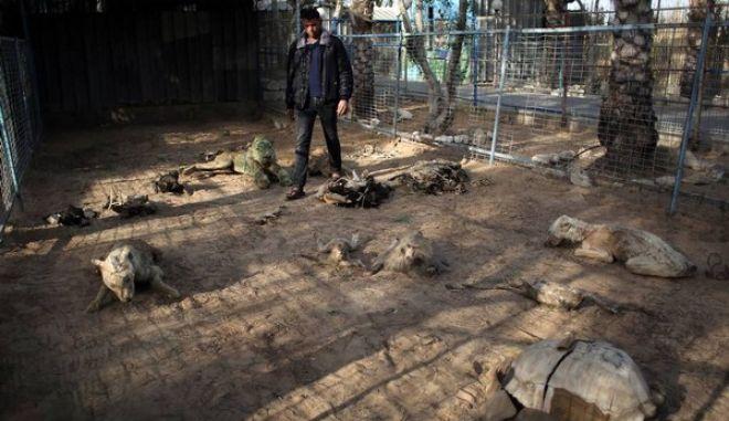 Σοκαριστικές εικόνες : Νεκρά ζώα στο ζωολογικό κήπο της Γάζας