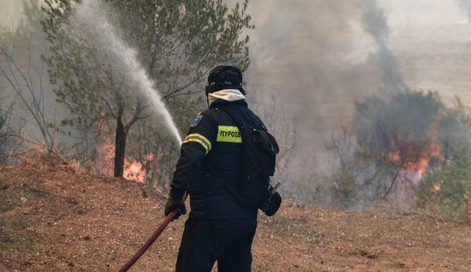 Πυρκαγιά σε δασική έκταση - Φωτογραφία αρχείου