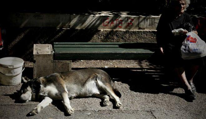 Άρειος Πάγος: Αυτόφωρο για όσους βασανίζουν ζώα