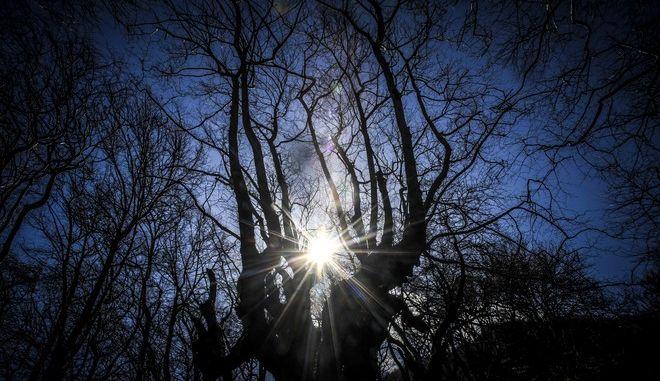 Ο ήλιος περνά μέσα από τα δέντρα σε δάσος στα ριζά του Κόζιακα στο νομό Τρικάλων
