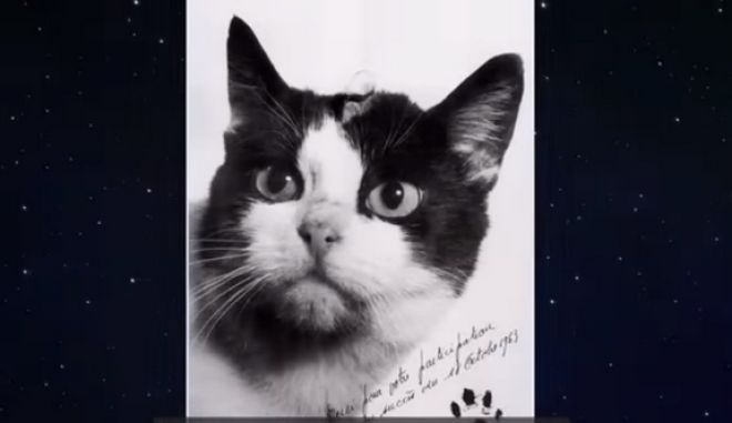 Φελισέτ: Η πρώτη γάτα που ταξίδεψε στο διάστημα, αποκτά το μνημείο που της αξίζει