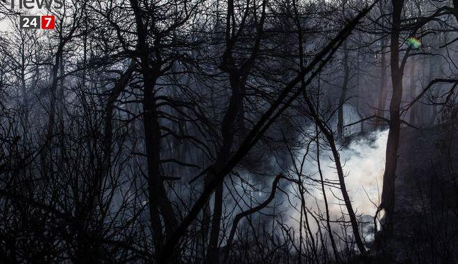 Στάχτη και αποκαΐδια ο Κάλαμος: Η εικόνα μετά τη φωτιά kalamos03c