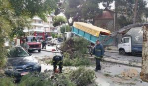 Θυελλώδεις άνεμοι στη Θεσσαλονίκη: Έπεσαν δέντρα - Προβλήματα σε μετακινήσεις, ηλεκτροδότηση