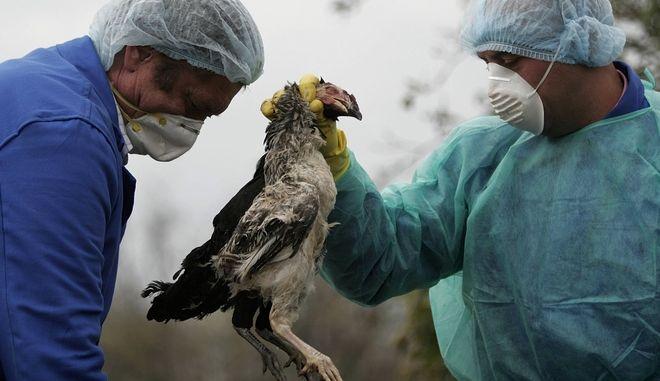 Γρίπη των πτηνών στη Ρουμανία