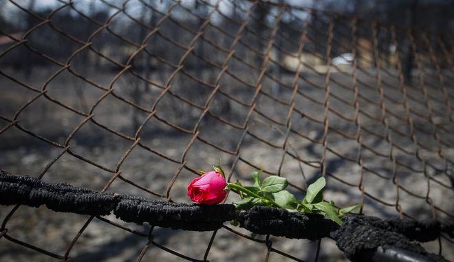 Λουλούδι στο σημείο που βρέθηκαν σωροί στο Μάτι