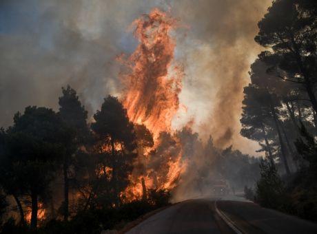 Φωτιά στην Εύβοια: Μεγάλη οικολογική καταστροφή - Σε συναγερμό οι αρχές