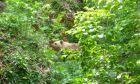 Αρκούδα στο Μικρό Παπίγκο