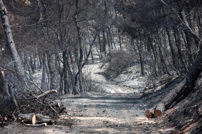 Η καταστροφική πυρκαγιά στην Εύβοια άφησε πίσω της χιλιάδες καμένες εκτάσεις παρθένου δάσους, σε προστατευόμενες περιοχές Natura.