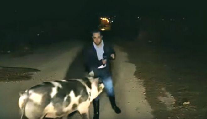 Ο ρεπόρτερ του ΑΝΤ1 Λάζος Μαντικός τη στιγμή της επίθεσης του γουρουνιού