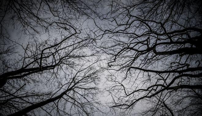 Δέντρα σε δάσος στα ριζά του Κόζιακα στο νομό Τρικάλων. (EUROKINISSI/ΘΑΝΑΣΗΣ ΚΑΛΛΙΑΡΑΣ)