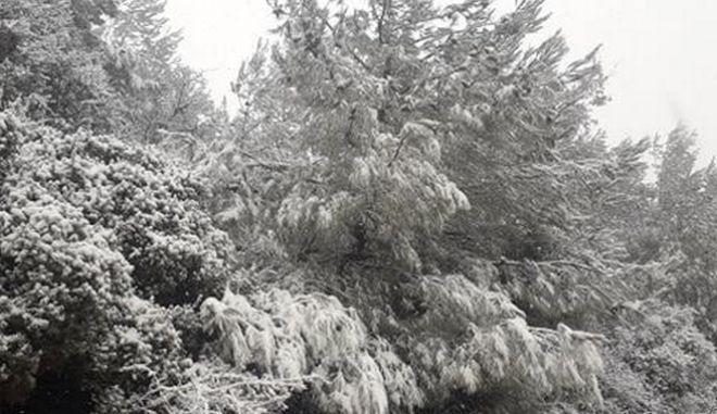 H Λέσβος στα λευκά ανήμερα τα Χριστούγεννα
