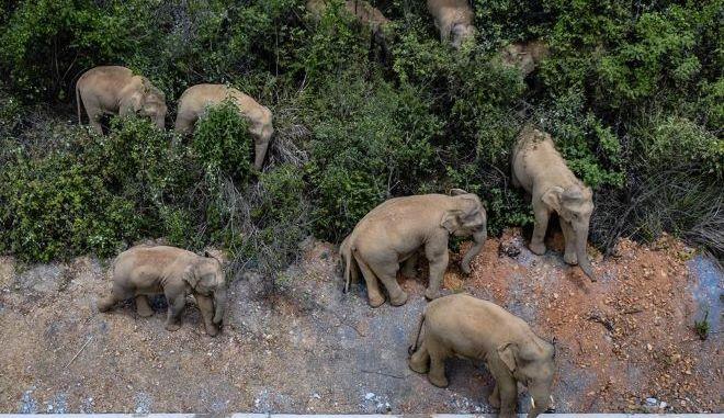 Κίνα: Η εκδρομή των ελεφάντων