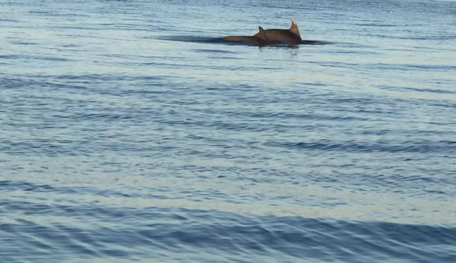 Θεσσαλονίκη: Δύο ζευγάρια δελφινιών τράβηξαν τα βλέμματα στην παραλία