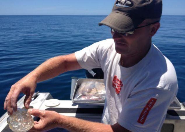 Διαφανές ψάρι εμφανίστηκε στη Νέα Ζηλανδία