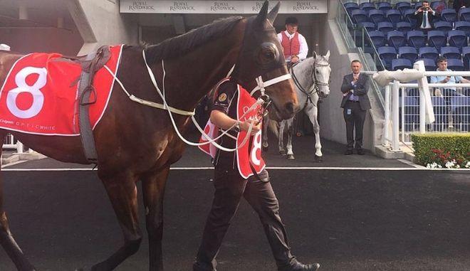 Το θηλυκό άλογο Winx