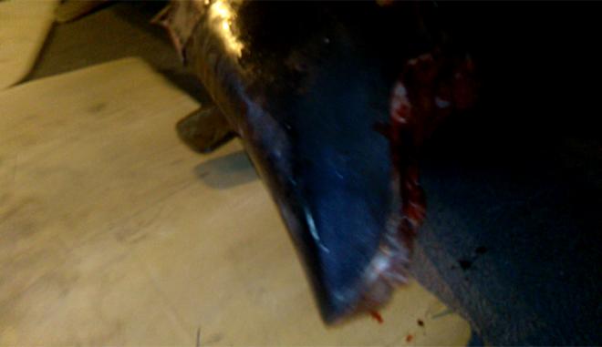 Λέσβος: Έψαχναν για μετανάστες και εντόπισαν καρχαρία