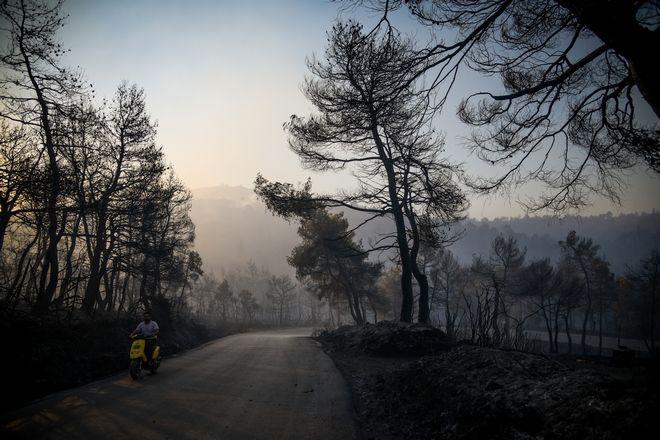 Με το πρώτο φως της ημέρας συνεχίζονται για 2η μέρα οι προσπάθειες κατάσβεσης της μεγάλης πυρκαγιάς στην Εύβοια, Τετάρτη 14 Αυγούστου 2019 (EUROKINISSI/ΜΙΧΑΛΗΣ ΚΑΡΑΓΙΑΝΝΗΣ)