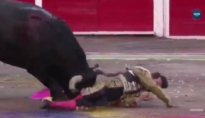 Ταύρος βγάζει νοκ άουτ ματαντόρ σε... ταυρομαχία για φιλανθρωπικό σκοπό