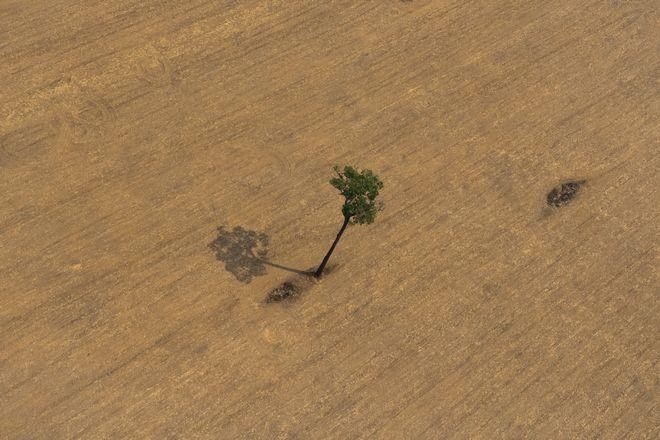 Δέντρο στον καμένο Αμαζόνιο