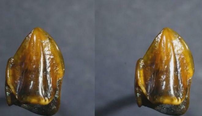 Δόντια 9,7 εκατ. ετών ξαναγράφουν την ανθρώπινη ιστορία