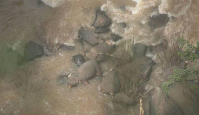 Οι νεκροί ελέφαντες σε εθνικό πάρκο της Ταϊλάνδης
